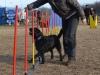 kutyagyerek_agility1