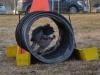 kutyagyerek_agility5
