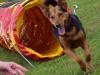 kutyagyerek_agility8