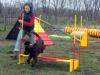 kutyagyerek_agility9