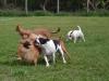 kutyagyerek_bentlakasos_iskola11