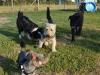 kutyagyerek_bentlakasos_iskola12
