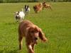 kutyagyerek_bentlakasos_iskola18
