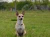 kutyagyerek_haznal_kepzes12