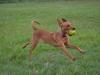 kutyagyerek_haznal_kepzes13
