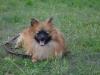 kutyagyerek_haznal_kepzes14