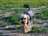 kutyagyerek_haznal_kepzes16