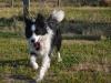 kutyagyerek_haznal_kepzes17