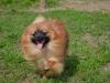 kutyagyerek_haznal_kepzes18