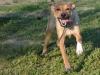 kutyagyerek_haznal_kepzes19