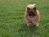 kutyagyerek_haznal_kepzes20