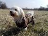 kutyagyerek_haznal_kepzes22