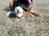 kutyagyerek_haznal_kepzes23
