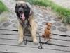 kutyagyerek_haznal_kepzes24