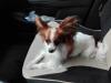 kutyagyerek_haznal_kepzes4