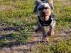 kutyagyerek_haznal_kepzes5