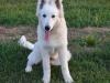 kutyagyerek_haznal_kepzes9