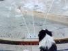 kutyagyerek_haznal_kepzes_1