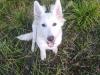 kutyagyerek_haznal_kepzes2