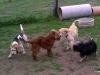 kutyagyerek_1