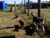 kutyagyerek_2