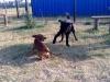 kutyagyerek_4