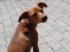 kutyagyerek_szaktanacsadas1