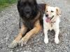 kutyagyerek_szaktanacsadas10