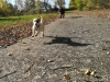 kutyagyerek_szaktanacsadas12