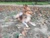 kutyagyerek_szaktanacsadas13