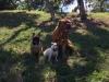 kutyagyerek_szaktanacsadas15