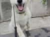 kutyagyerek_szaktanacsadas2