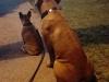 kutyagyerek_szaktanacsadas6