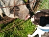 kutyagyerek_szaktanacsadas9
