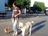 kistestu_kutyakikepzes (26)