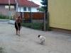 kistestu_kutyakikepzes (36)