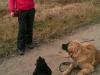 kistestu_kutyakikepzes (40)